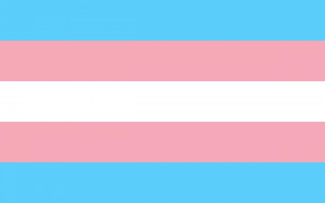 """""""Protocolo para promover medidas que garanticen el derecho al voto de las personas trans (transgénero, transexuales y travestis) en igualdad de condiciones y libre de discriminación"""""""